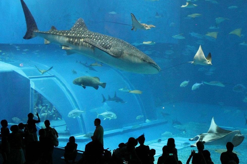 5 lugares para visitar en verano en CDMX acuario inbursa
