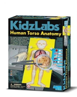 Anatomía del Torso Humano – 4M