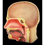 Miremos Dentro del Cuerpo Humano